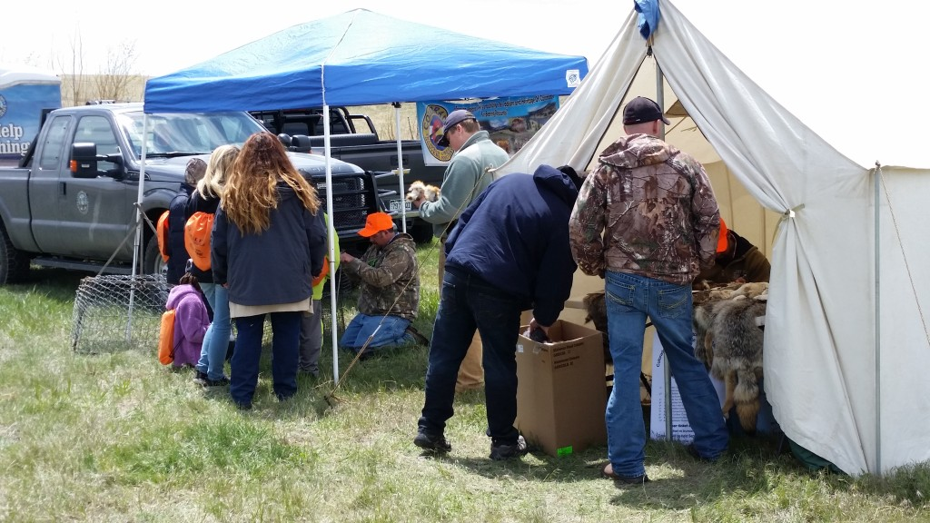 Muley Days in May at Rocky Mountain Roosters